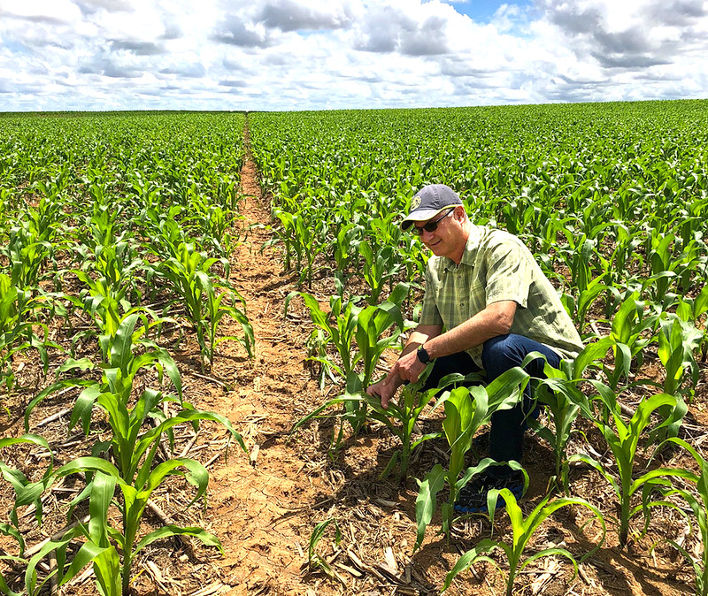 ISCA Global CEO Agenor Mafra-Neto inspects corn growing in the Rio Verde, Goiás, Brazil.